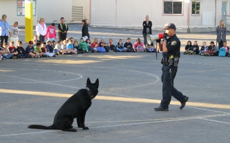Police officer and patrol dog